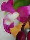 1391780_183375405185759_1952530986_n.jpg