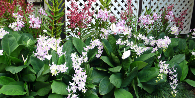 Orquídeas en Exteriores