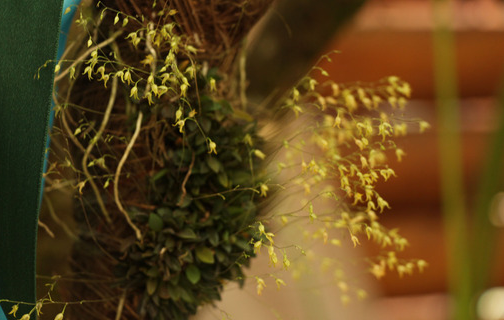 Se descubrió una nueva variedad de orquídea en Montecarlo