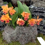 67th South Florida Orchid Society Expo – Fotos
