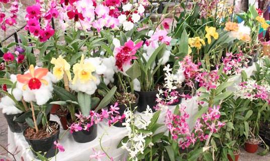 Morelia fue declarado primer municipio protector y productor de Orquídeas, en el ORQUIFEST 2013