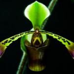 3 tips para prolongar el período de floración