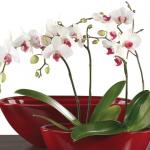 Orquídeas para principiantes: 3 errores comunes