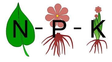 Que fertilizante debes usar para tus orquídeas?