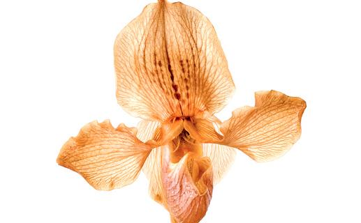 Tus orquídeas perdieron sus flores en solo unos días?
