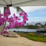 Planning your vacations? What about your orchids?