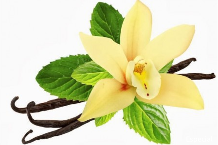 En peligro de extinción especies de orquídeas de Veracruz (México), advierten