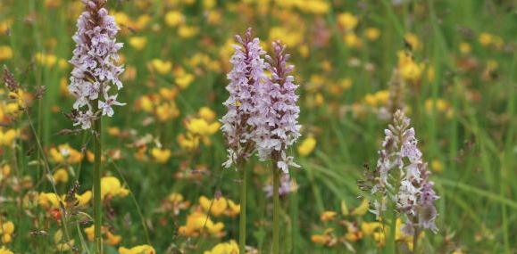 Orquídeas: cuidados para Primavera