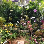 Fotos Tamiami International Orchid Show 2014 – Parte 2